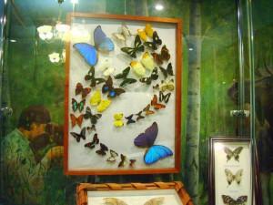 Выставка экзотических бабочек и жуков